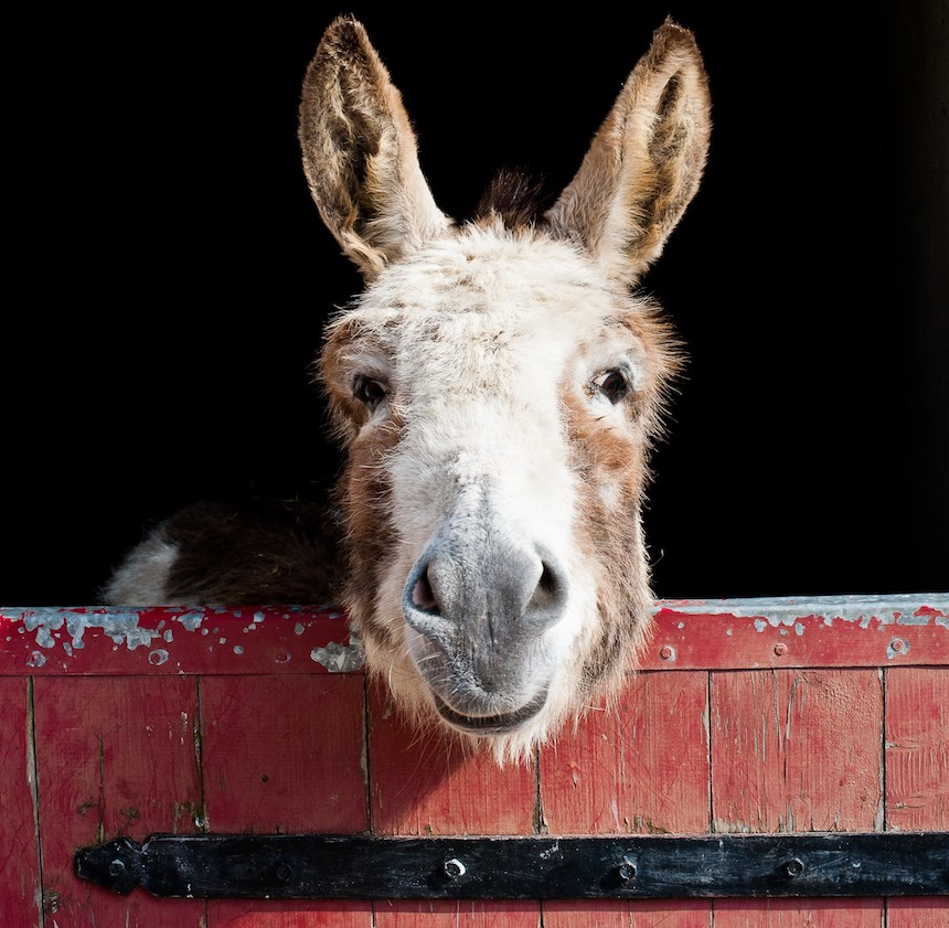 Do_Donkeys_act_review